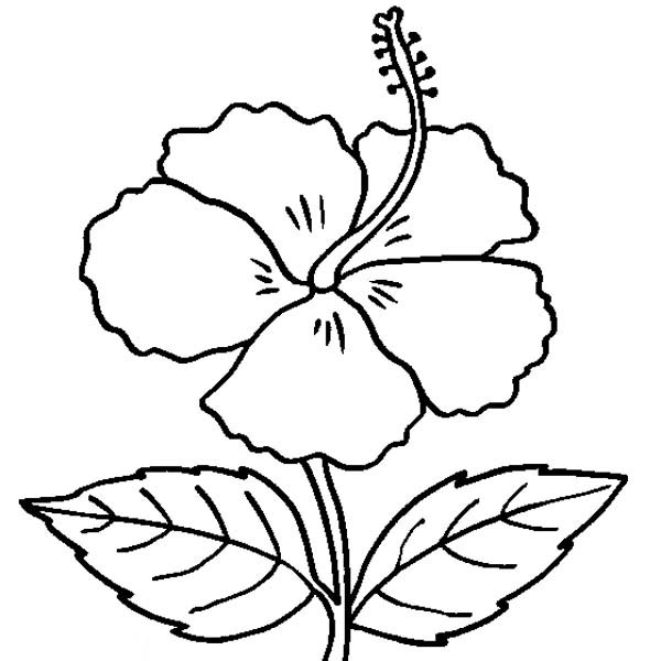 Hibiscus Flower In Bloom Coloring Page