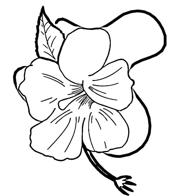 Hibiscus Flower in Blossom Coloring Page: Hibiscus Flower in ...