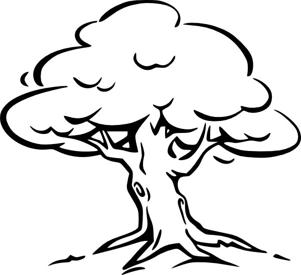 Oak Tree Coloring Page for Kids: Oak Tree Coloring Page for Kids ...
