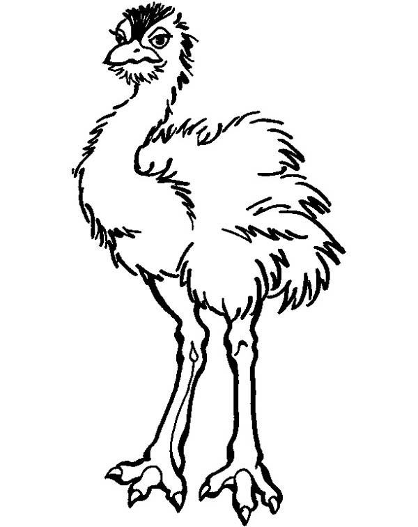 Beautiful Feather Ostrich Coloring Page