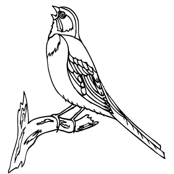 Bird Chirping Coloring Page