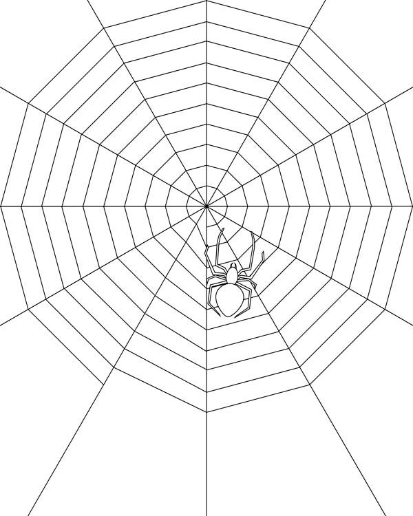 Spider Make Very Wide Spider Web Coloring Page Spider Make Very
