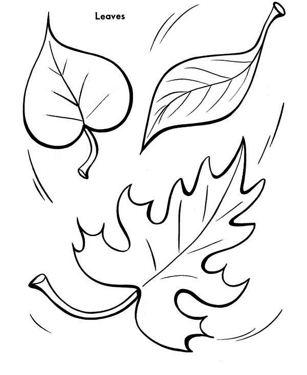 Fall Leaf to the Ground Coloring Page: Fall Leaf to the Ground ...
