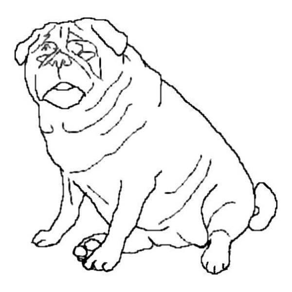 Fat Pug Dog Coloring Page: Fat Pug Dog Coloring Page – Color Luna