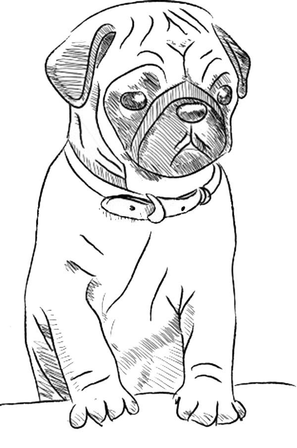 Pug Dog Skecth Coloring Page Color