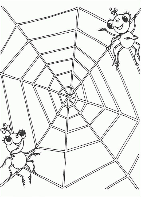 Spider, : A Spider Couple on the Edge of Spider Web Coloring Page