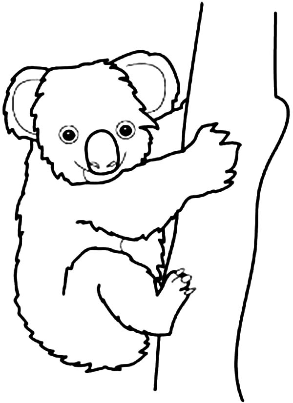 Koala Bear, : Australian Koala Bear Coloring Page