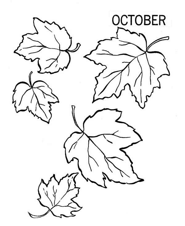 Fall Leaf, : Autumn Fall Leaf Coloring Page