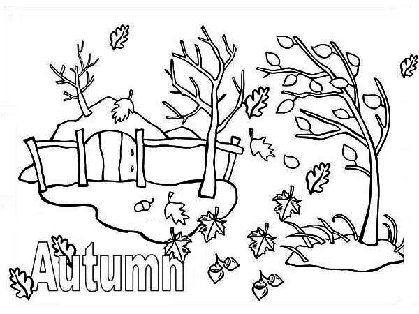 Worksheet. Autumn Season with Fall Leaf Coloring Page  Color Luna