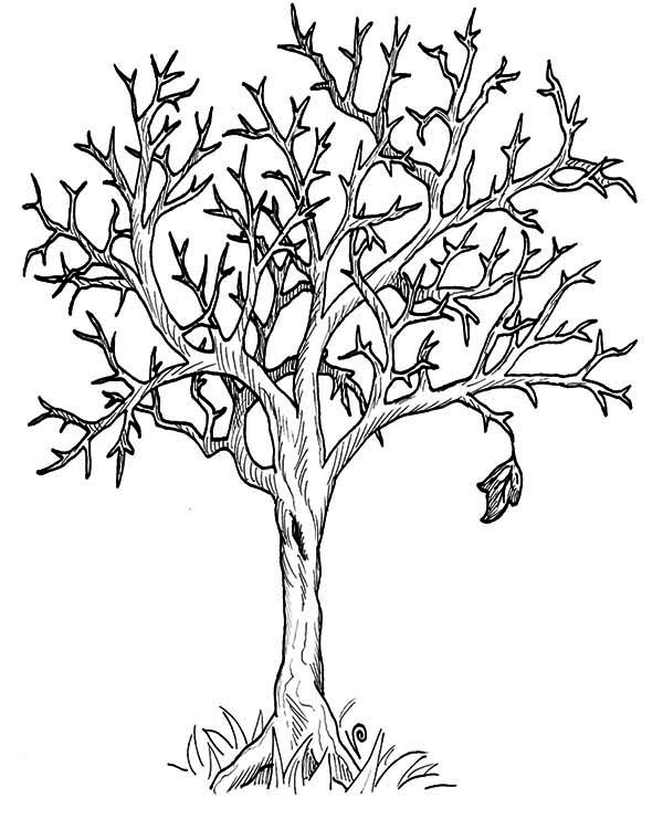 autumn tree without leaves in fall leaf coloring page - Tree Leaves Coloring Page