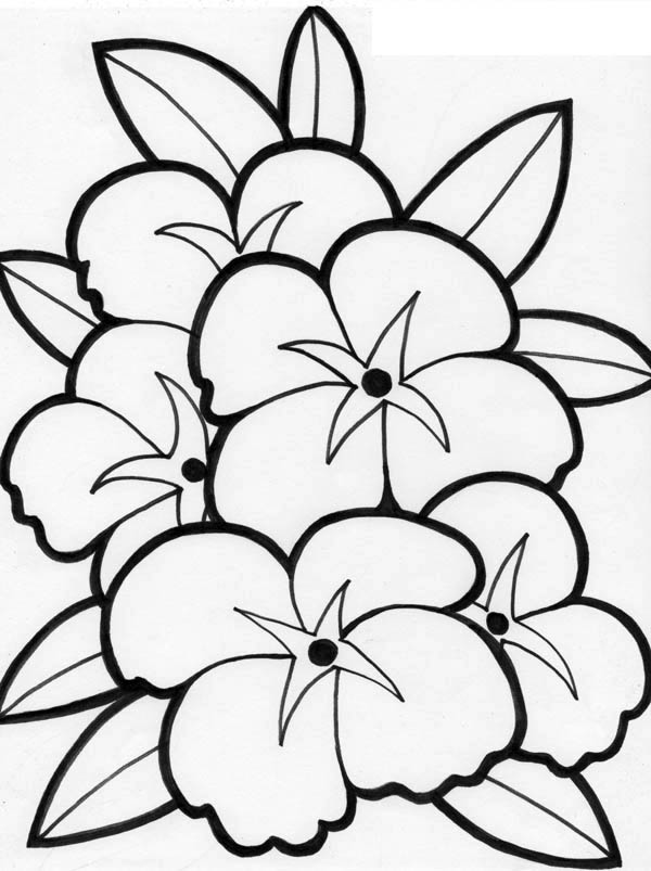 Delicate image in free printable coloring pages of flowers