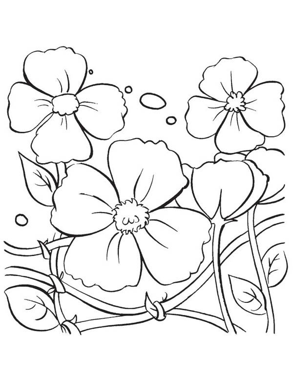 Hibiscus Flower, : Beautiful Poppy Flower Coloring Page