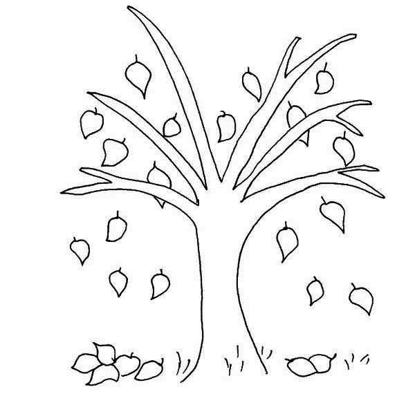 beech tree fall leaf coloring page - Tree Leaves Coloring Page