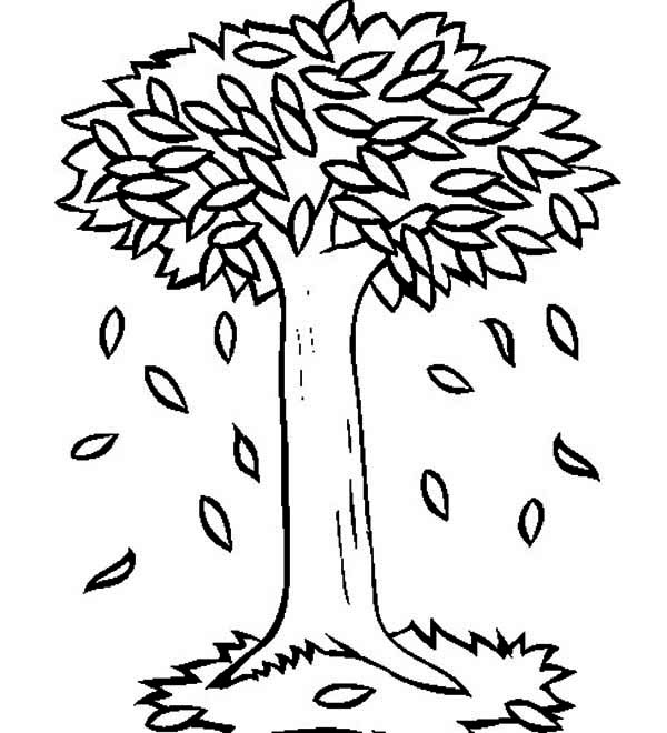 big trees in autumn with fall leaf coloring page - Tree Leaves Coloring Page