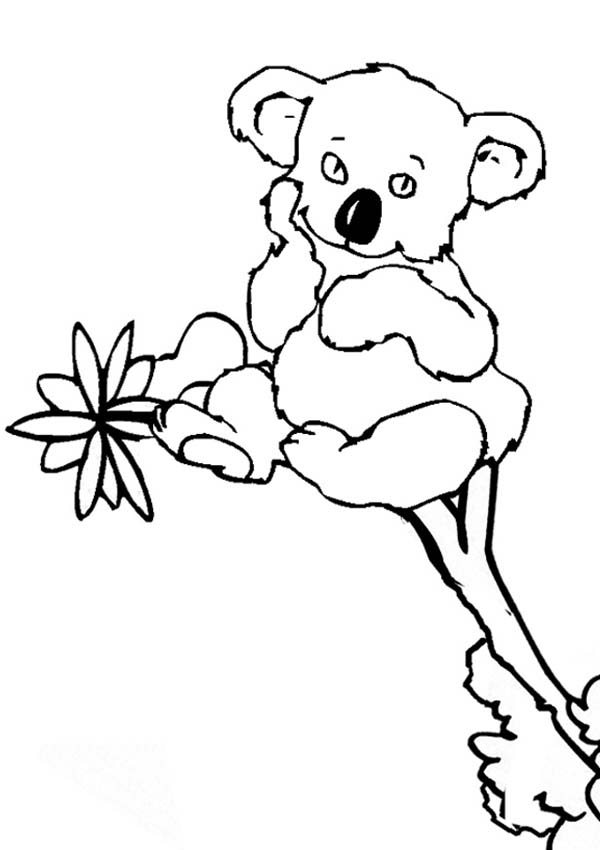 koala bear coloring pages - koalas free coloring pages