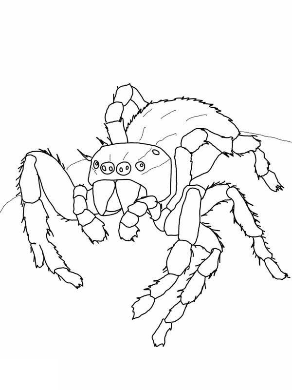 Spider, : Daring Jumping Spider Coloring Page