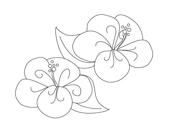 Hibiscus Flower, : Fancy Hibiscus Flower Coloring Page