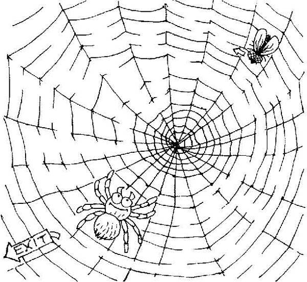 Spider, : Fly Trapped on Spider Web Coloring Page
