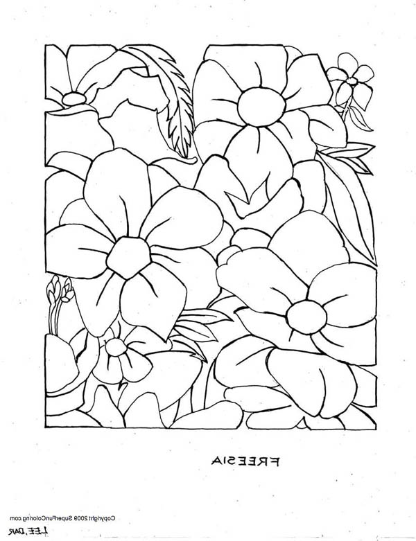 Hibiscus Flower, : Freesia Flower Coloring Page