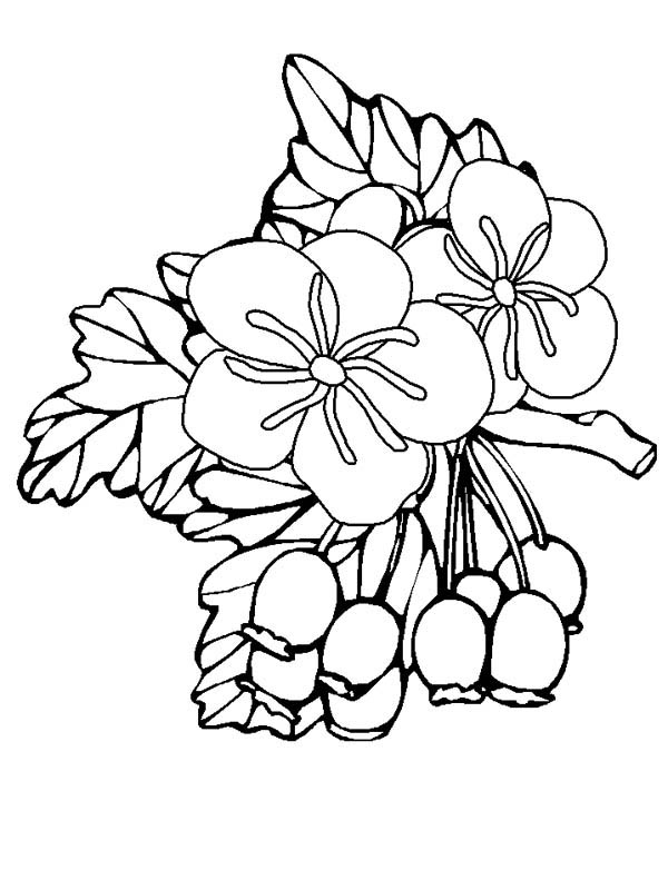 Hibiscus Flower, : Hawthorn Flower Coloring Page
