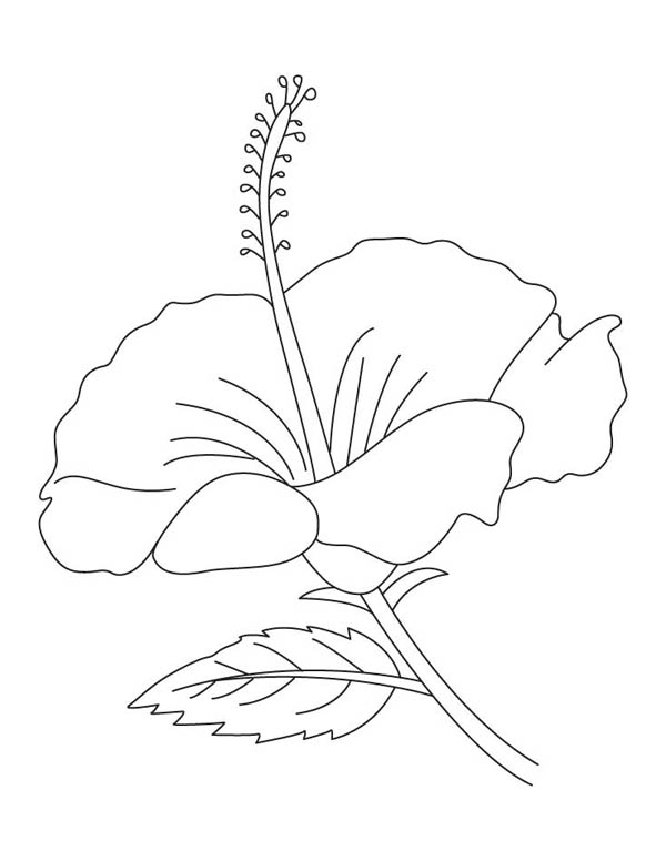 Puerto Rican Hibiscus Coloring Pages Coloring Pages
