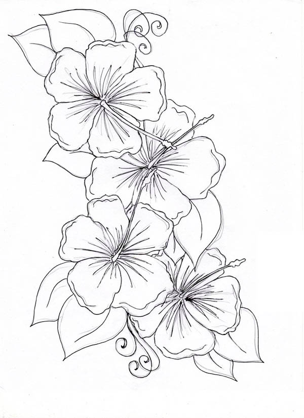 Hibiscus Flower Drawing Coloring Page
