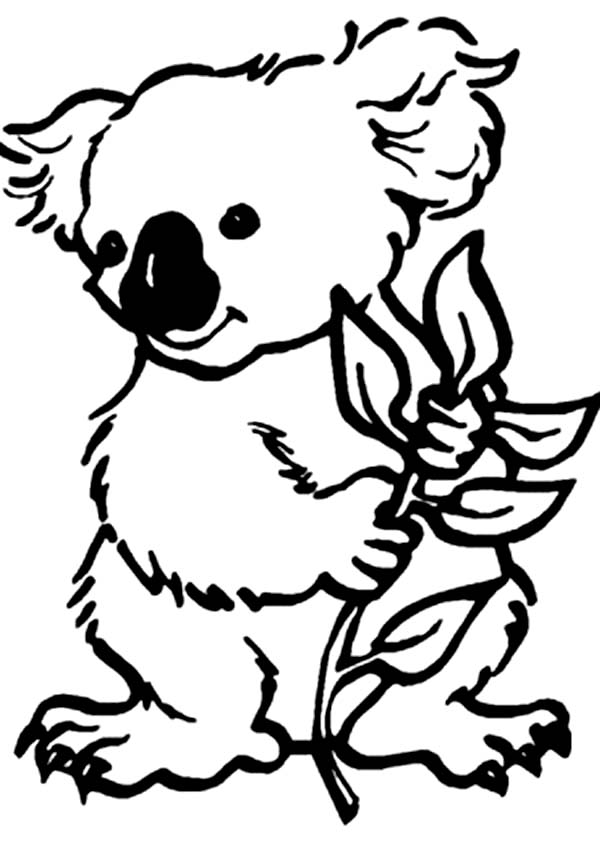 Koala Bear Coloring Page Color Luna