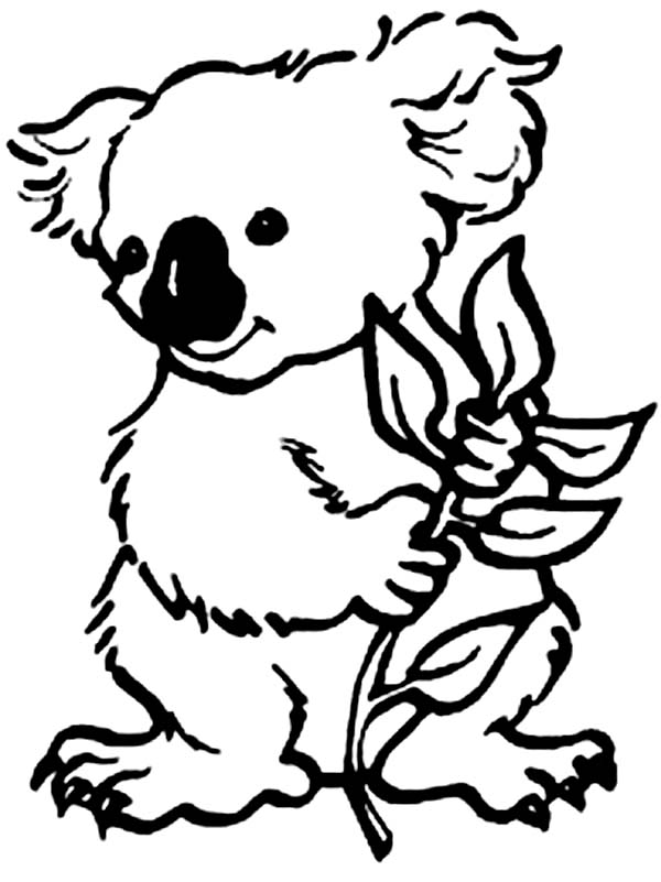 Koala Bear Eating Eucalyptus Coloring Page