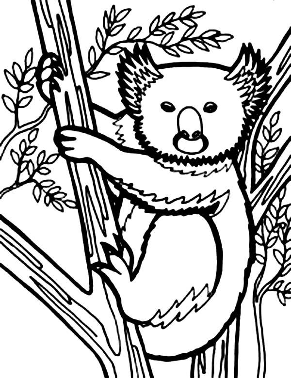 Koala Bear, : Koala Bear Looks Like Wolverine Coloring Page