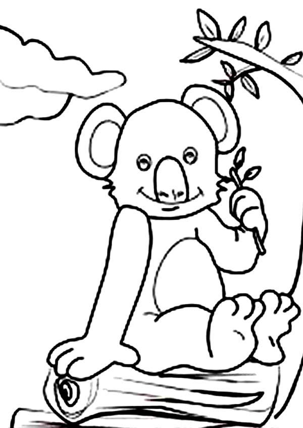 Koala Bear, : Koala Bear Sitting Coloring Page