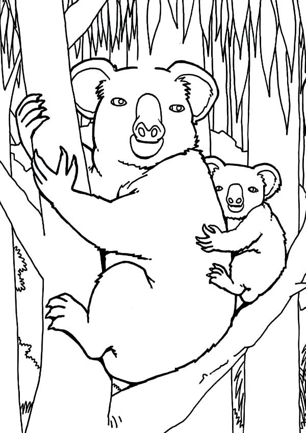 Koala Bear, : Koala Bear in the Jungle Coloring Page