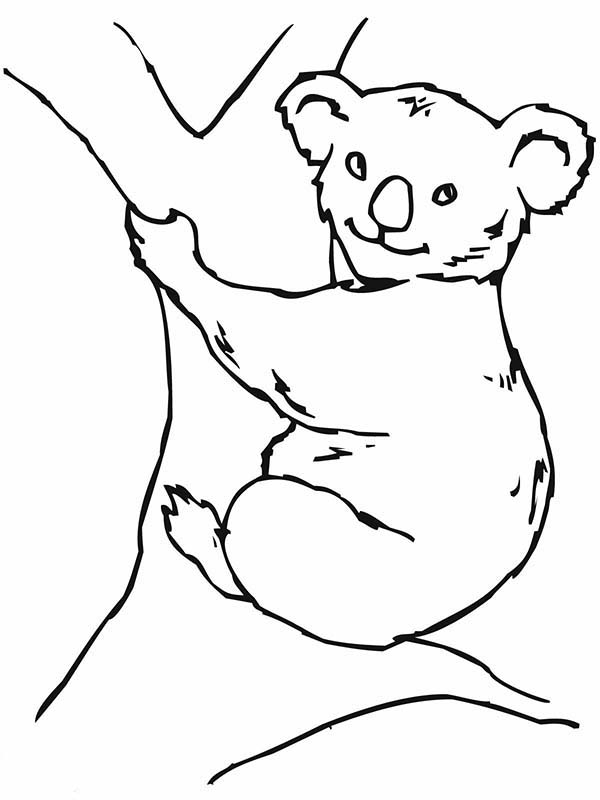 Koala Bear, : Koala Bear on Big Tree Coloring Page