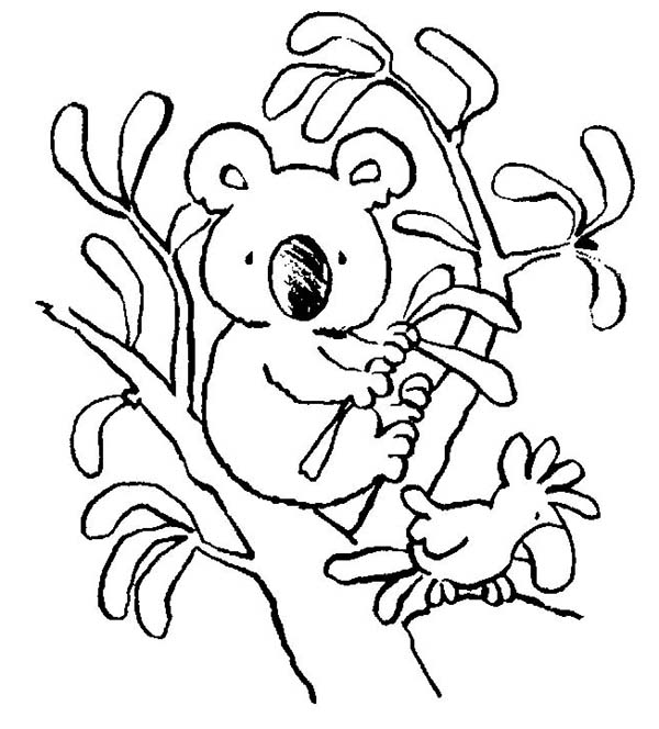Koala Bear, : Koala Bear with Bird Coloring Page