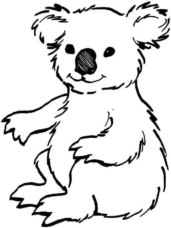 Loving Koala Bear Coloring Page Color Luna