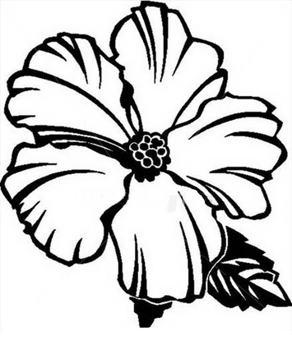 Picture Of Hibiscus Flower Coloring Page