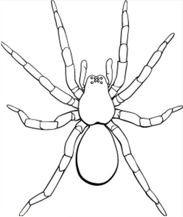 Spider Picture Of Tarantula Coloring Page