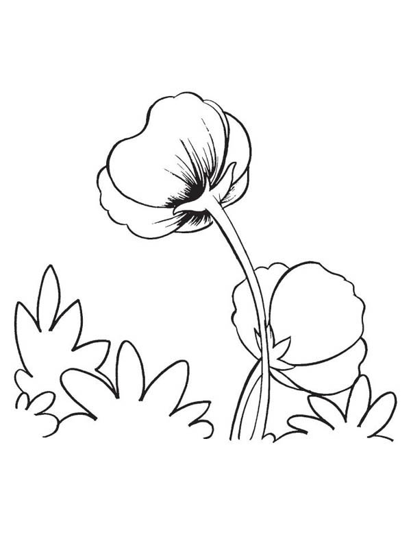 Hibiscus Flower, : Poppy Flower Coloring Page
