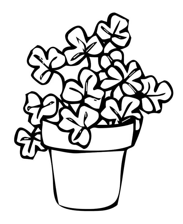 Four-Leaf Clover, : Rare Four-Leaf Clover on Common Three-Leaf Clovers Coloring Page