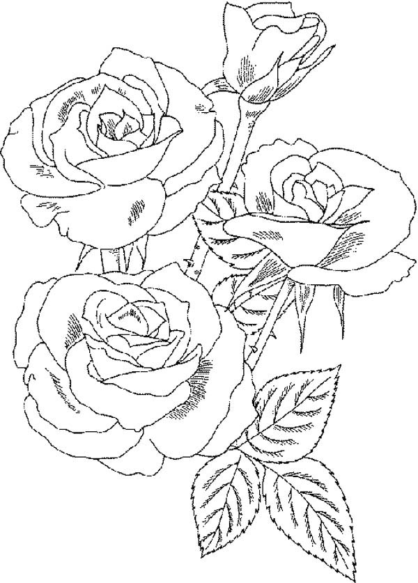 Roses Flower Bouquet Coloring Page