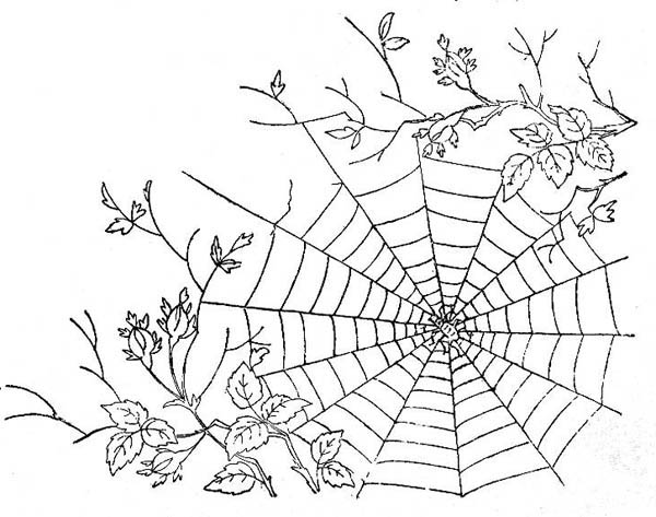 Spider, : Spider Web Between Tree Branch Coloring Page