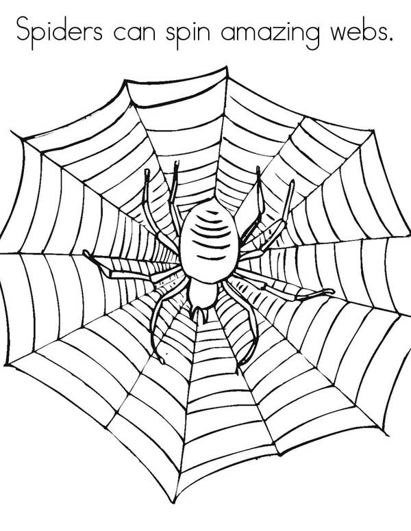 Spider, : Spiders Can Spin Amazing Spider Web Coloring Page