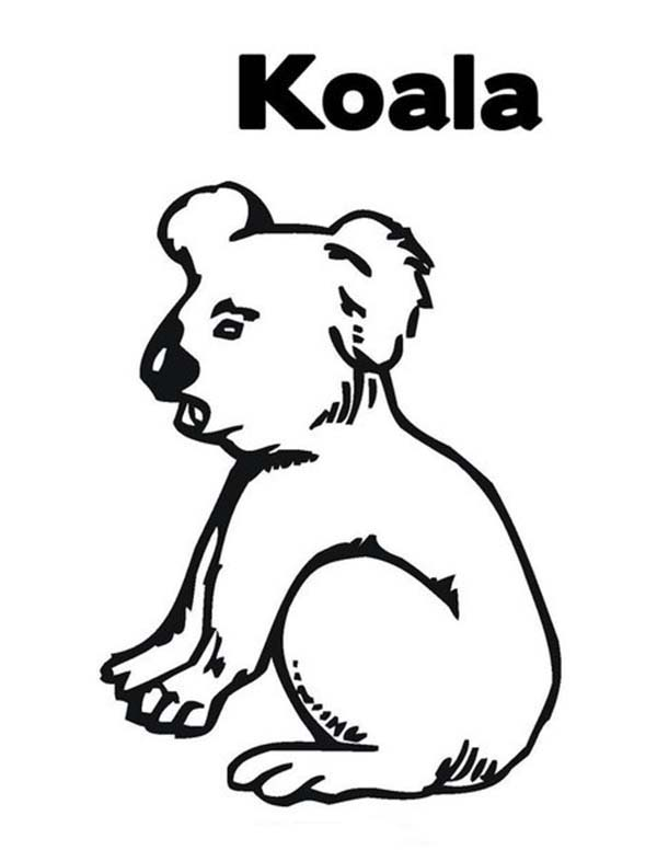 Koala Bear, : Thirsty Koala Bear Coloring Page