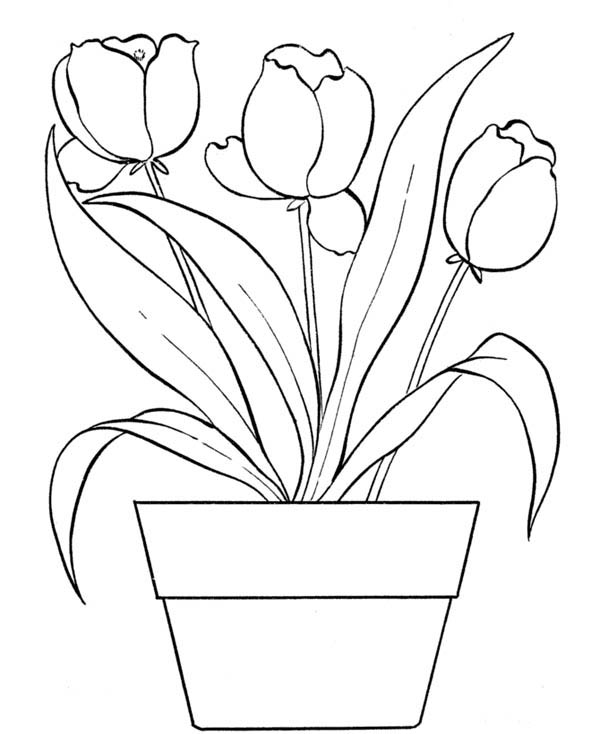 Flower Bouquet, : Tulips for Flower Bouquet Coloring Page