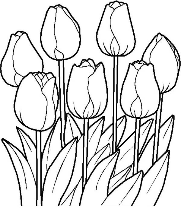Flower Bouquet, : Tulips in the Garden in Flower Bouquet Coloring Page