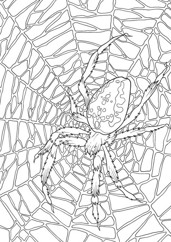 Spider, : Very Large Spider Web Coloring Page