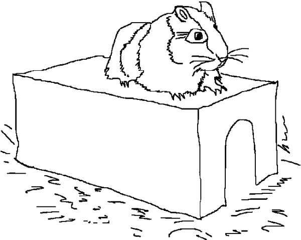 A Hamster on Its Limps in Guinea Pig Coloring Page Color Luna