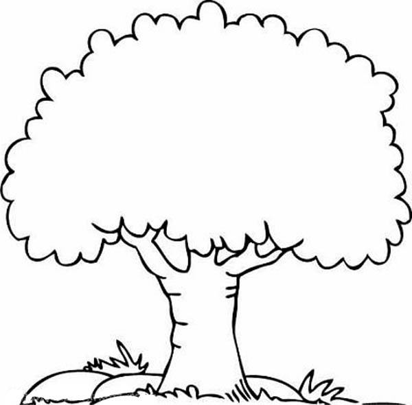 A Shady Oak Tree Coloring Page Color Luna Oak Tree Coloring Page