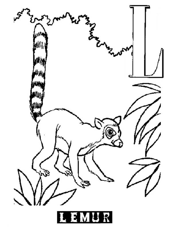 Alphabet L is for Lemur Coloring Page Color Luna