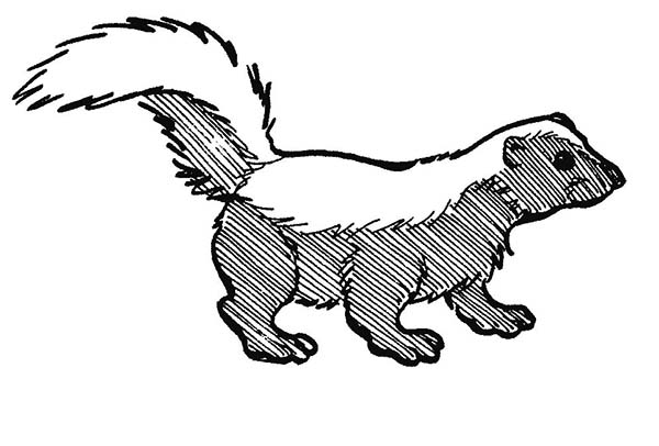 Amazing black skunk coloring page color luna for Coloring page of a skunk