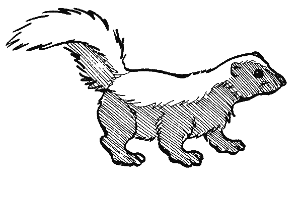 Index of wp content uploads 2014 03 for Coloring page of a skunk